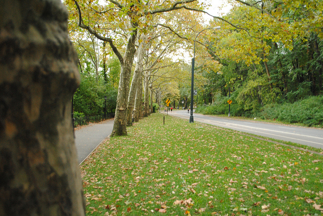Image of Central Park courtesy of Flickr user AlexiUeltzen